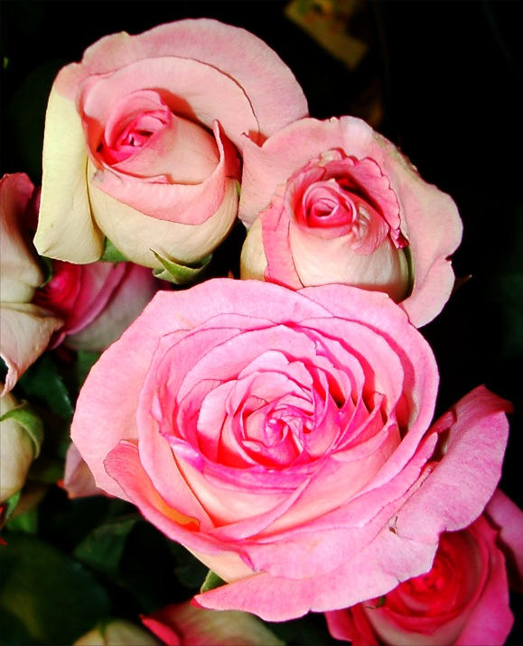 picture of pink - photo #15